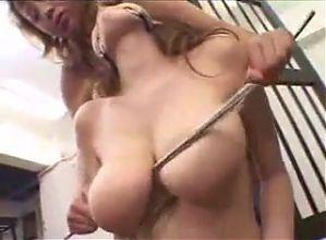 Japan Tits